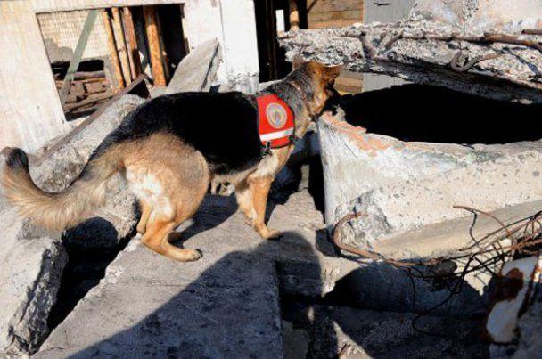 Украина отправит в Японию спасателей с собаками