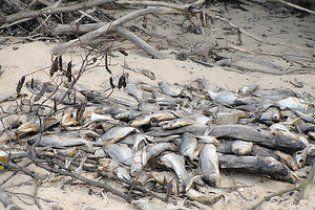 У Голосіївському районі Києва на березі озера виявили сотні мертвих риб