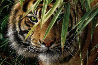 В Приморье из лаборатории сбежала тигрица