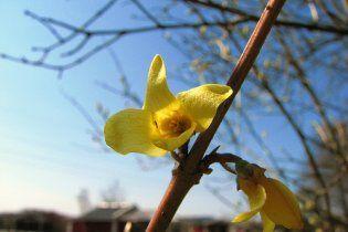 Погода в Украине на четверг, 31 марта