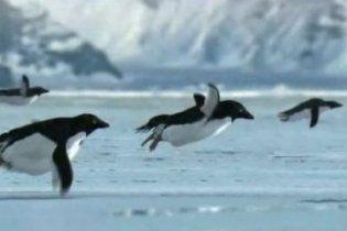 """""""Пінгвіни відлітають на південь"""": Топ-5 першоквітневих наукових відкриттів"""