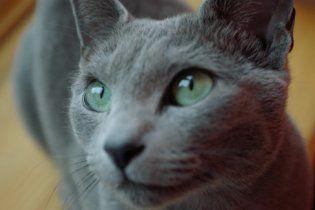 В Казахстане женщина отстояла в суде право на 50 кошек