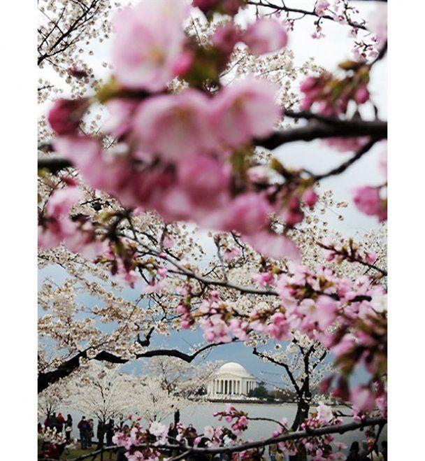 Неделя в фотографиях. 28 марта - 1 апреля