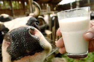 В сезон удешевления молока в Украине оно дорожает