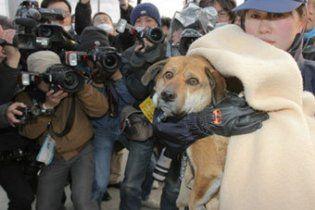 Собака, спасенная через три недели после землетрясения в Японии, нашла хозяина