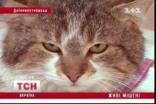 У Дніпропетровську невідомі розстрілюють тварин на вулицях