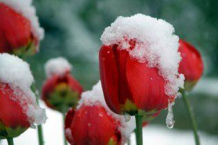 Після вихідних в Україні піде сніг