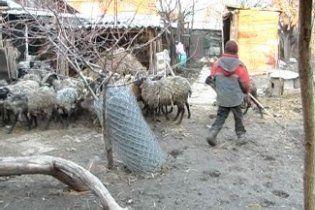 На Харківщині чоловік змушував 10-річного небожа працювати по 15 годин на день
