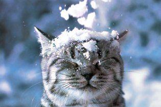 В понедельник в Украине - 7 градусов мороза и снег