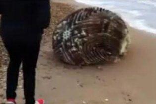 У Японії на узбережжі знайшли дивний предмет, який не можуть ідентифікувати (відео)