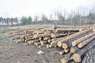 Під Києвом почали випалювати ліс під особняки