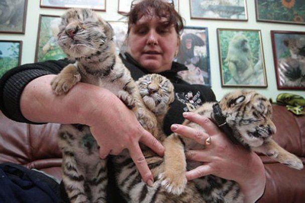 В Ялті народилась трійня уссурійських тигрів