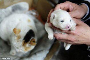 У Китаї кішка народила цуценя