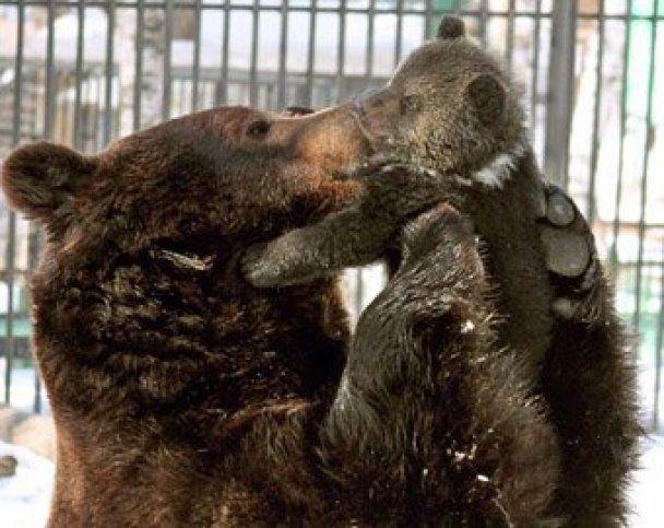 Фотографы нашли в зоопарке идеального медведя-папу