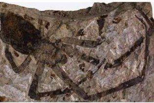 У Китаї знайшли останки стародавнього гігантського павука