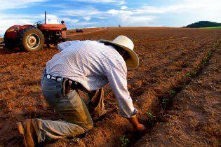 Украинские аграрии получили из бюджета 1,6 млрд гривен дотаций