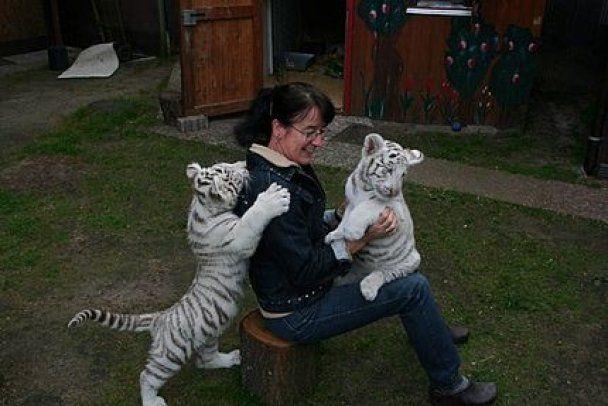 Женщина вырастила в своем доме 50 львят