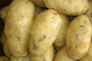Украине грозит дефицит картофеля