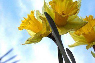 Погода в Україні на п'ятницю, 29 квітня