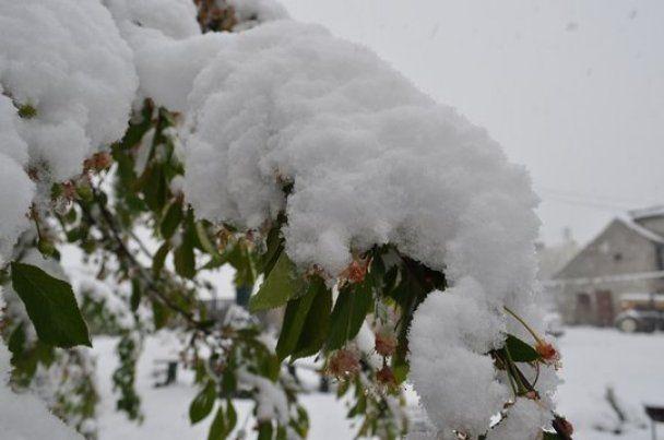 Польшу замело снегом в разгар весны