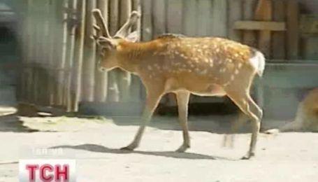 Київському зоопарку доведеться перетерпіти переїзд...