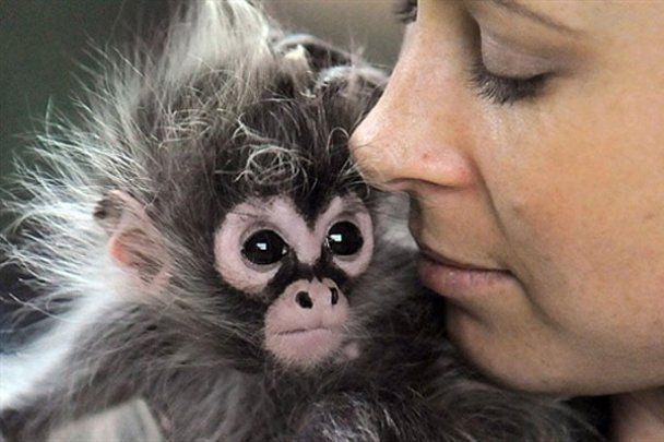 Мавпенятко Естелу вдочерила власна бабуся