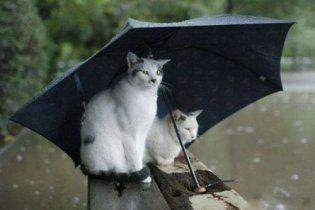 Погода в Украине на субботу, 7 мая