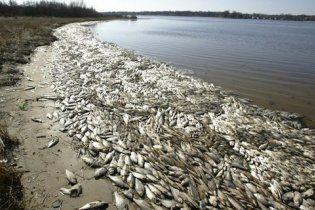 На Миколаївщині у лимані загинуло 1,5 тонни риби