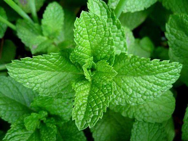 Топ-10 запахов, которые помогут похудеть