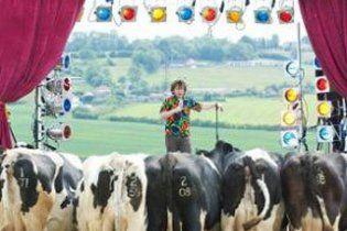 Британский комик попытался развеселить стадо коров