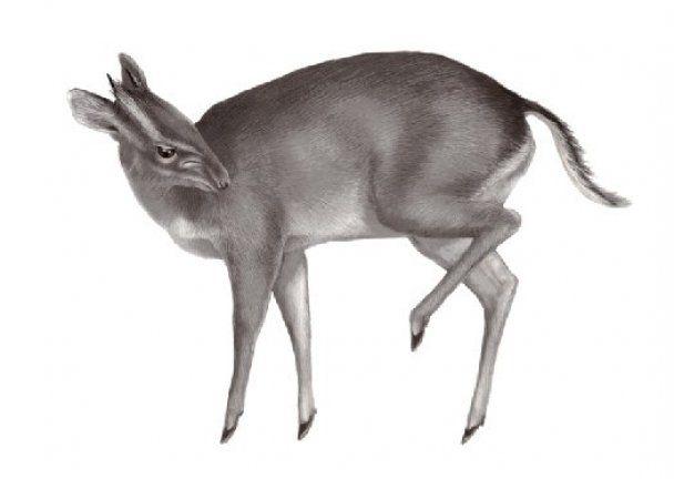 Топ-10 самых странных существ, которых открыли в 2010 году