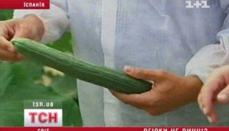 Огірки не винні