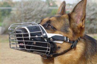 У Києві почали активно штрафувати за відсутність повідця і жетона у собаки