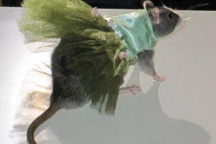 В Нью-Йорке состоялся показ мод для крыс (видео)