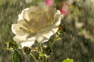 Погода в Украине на четверг, 9 июня