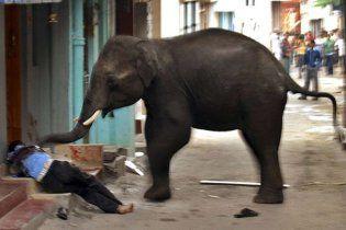 Тайский слон затоптал молодоженов из Украины