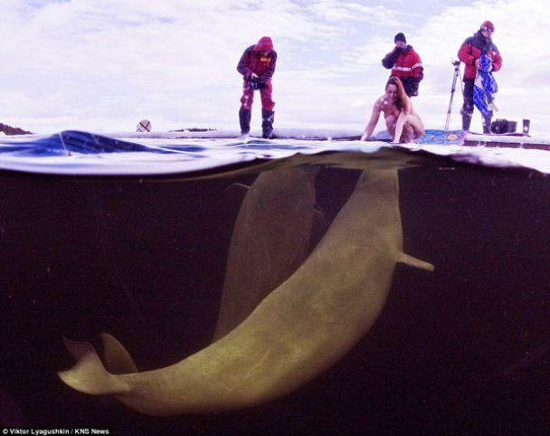 Оголена жінка-вчений пірнає з китами в арктичному морі