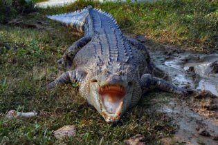 """В храме Бангладеш """"священный"""" крокодил съел верующую"""