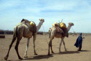 Засуха на востоке Африки признана худшей за 60 лет
