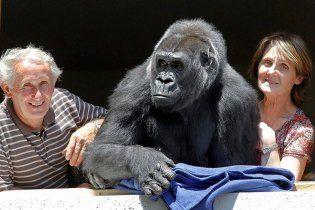 Французька пара пенсіонерів, яка не має власних дітей, удочерила 13-тирічну горилу
