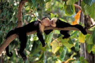 Создана первая рекламная кампания для обезьян