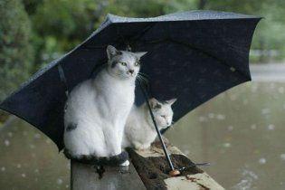 Дожди в Украине не прекратятся