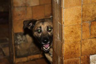 В Киеве задержали 19-летнего убийцу собак