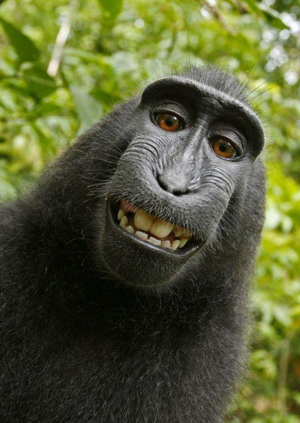 Макака устроила себе фотосессию в джунглях