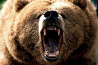 Ведмідь-ласун влаштував погром в магазині солодощів