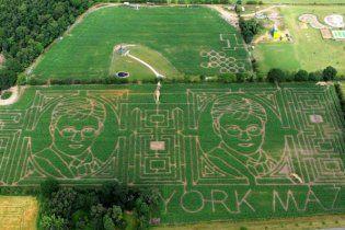"""В Британии создан самый большой лабиринт Европы - """"кукурузный портрет"""" Гарри Поттера"""