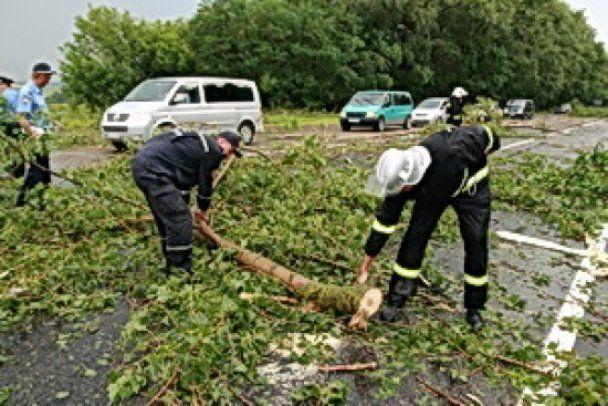 Упавшие деревья заблокировали автостраду в Западной Украине