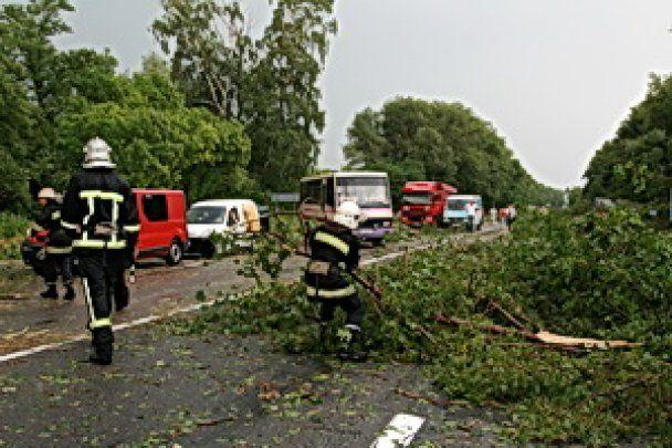 Повалені дерева заблокували автостраду в Західній Україні