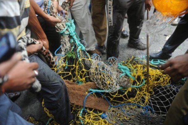 Дикий леопард растерзал шестерых лесников в Индии