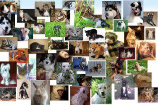 В Україні з'явилася соціальна мережа для тварин